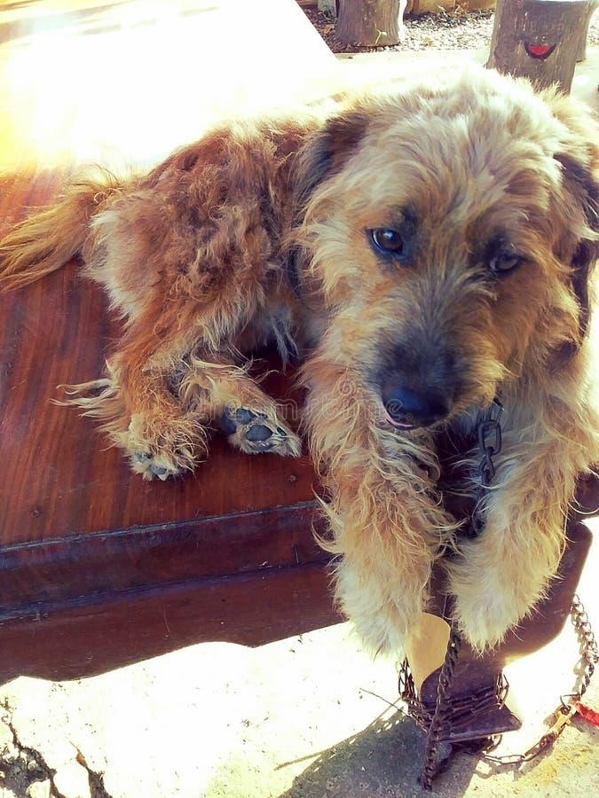 Собаки дружелюбны к человеческому стоковые изображения