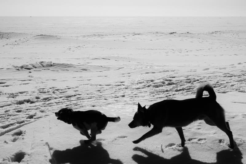 Собаки играя в обширном снеге дали стоковое изображение