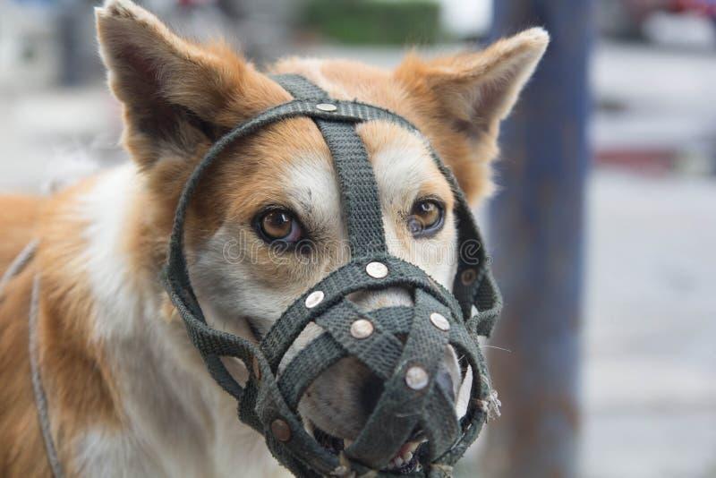 Собаки, который нужно muzzle стоковая фотография