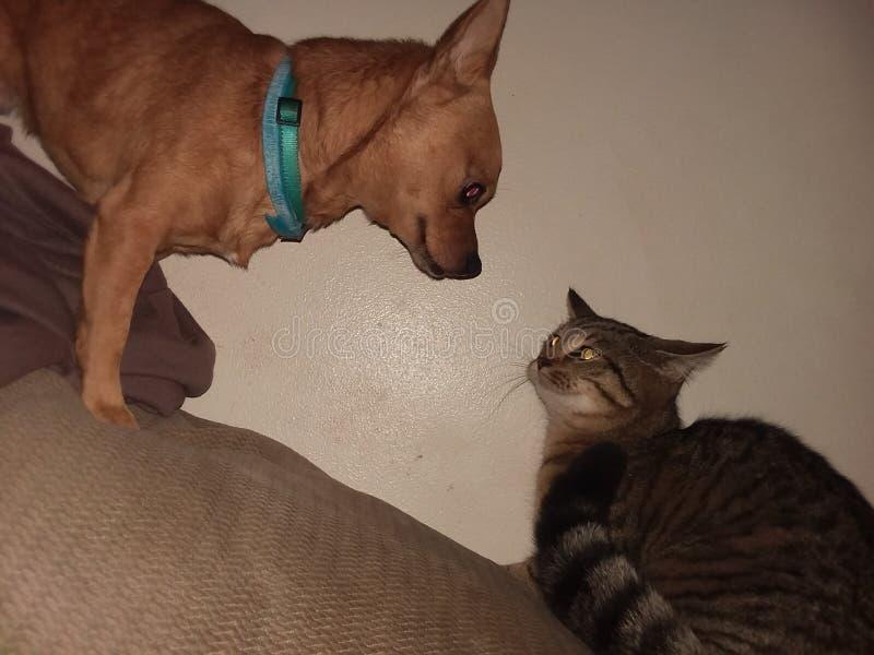 Собаки & коты стоковая фотография rf
