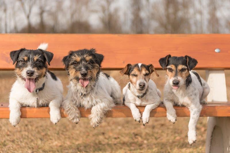 4 собаки лежа на скамейке в парке - поднимите терьера домкратом Рассела стоковое фото rf