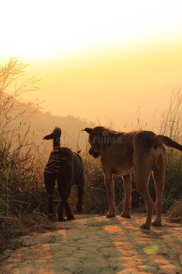 2 собаки, луг, заход солнца стоковые фото