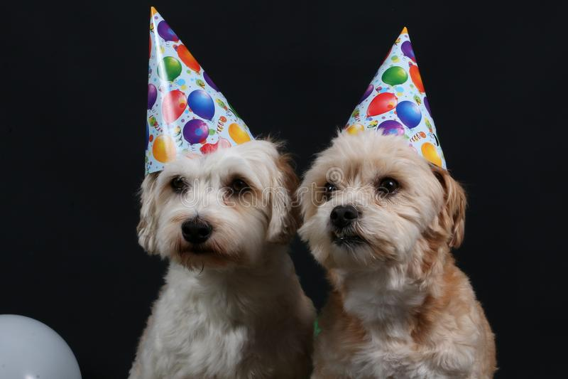 2 собаки партии стоковые фото