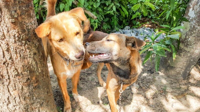 2 собаки друг, играя стоковое фото rf