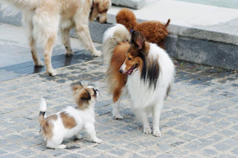 собаки связи стоковое фото rf