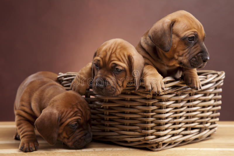 собаки справляются счастливое усаживание 3 деревянное стоковые фотографии rf