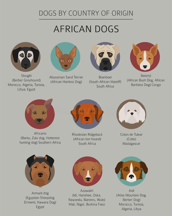 Собаки страной происхождения Африканские породы собаки Templ Infographic иллюстрация штока