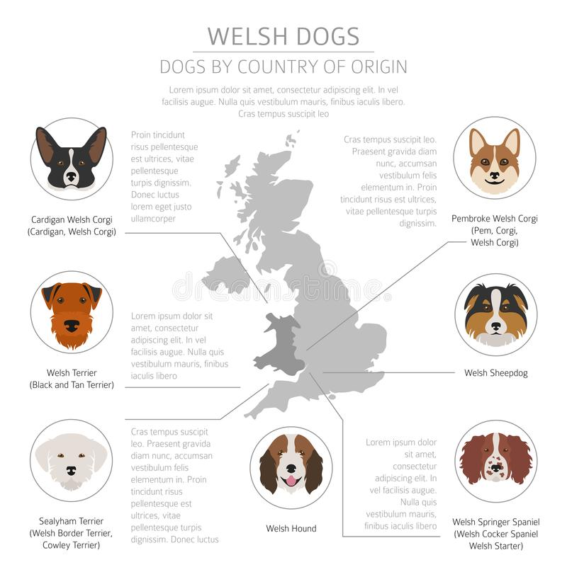 Собаки страной происхождения Породы собаки Walsh Templat Infographic иллюстрация вектора