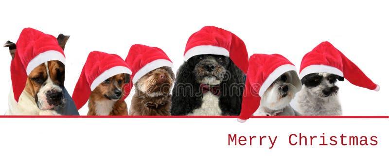 Собаки с красными шляпами Санта Клауса стоковое изображение
