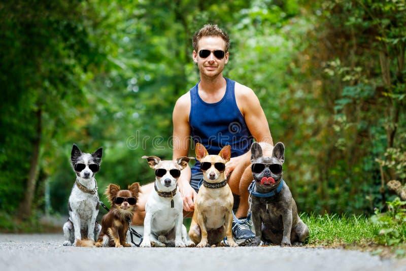 Собаки с поводком и предпринимателем готовыми для того чтобы пойти для прогулки стоковое фото rf