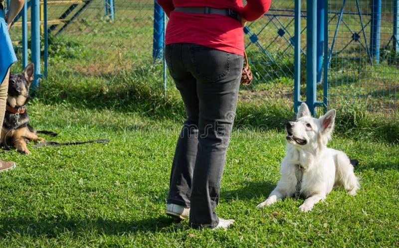 Собаки стоковая фотография rf
