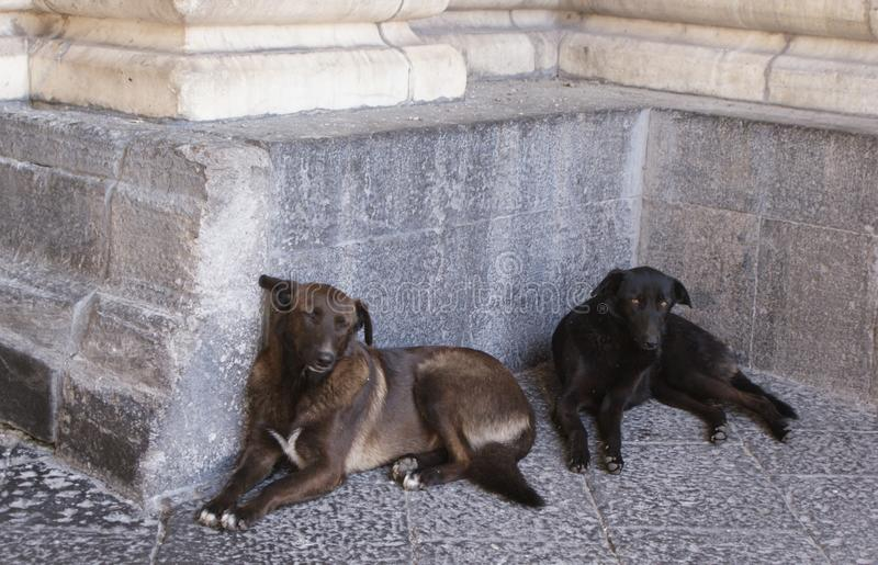 собаки 2 стоковое фото