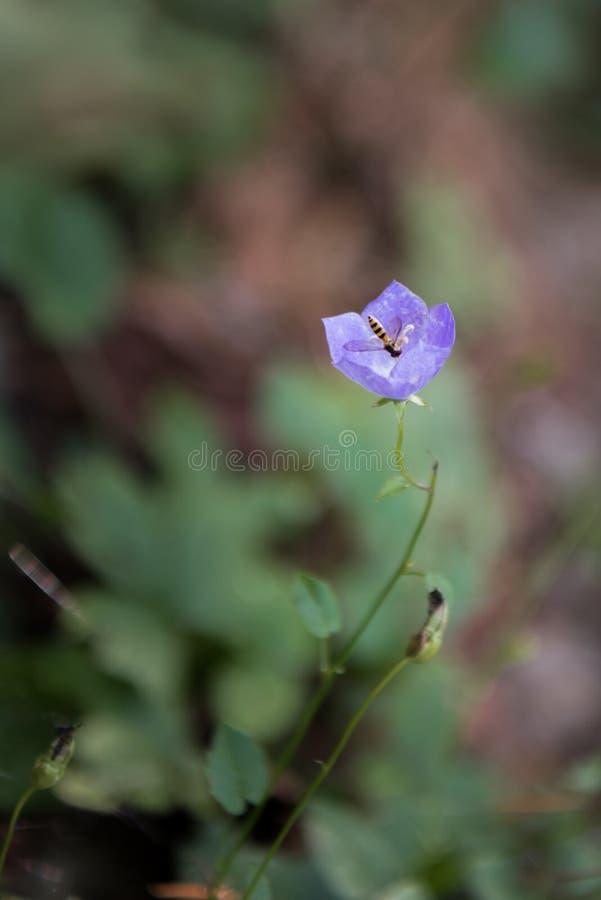 Собак-фиолетовый с пчелой стоковые изображения rf