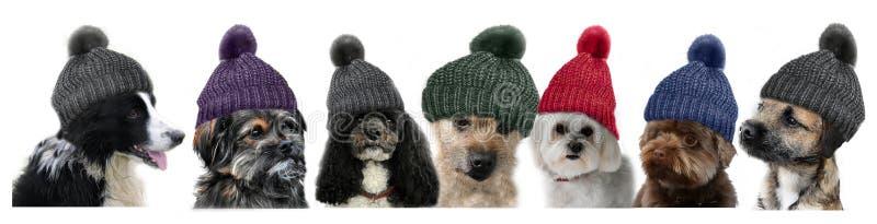 7 собак стоковые фото