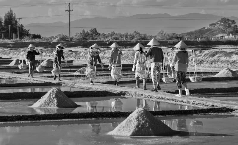 Соберите тяготу соли фермеров соли на лотках соли стоковая фотография
