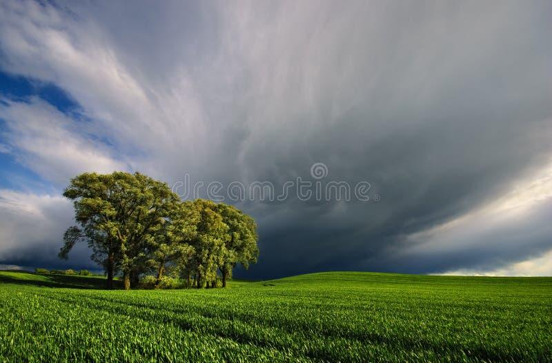 Собирать шторм над пшеничным полем стоковые изображения rf