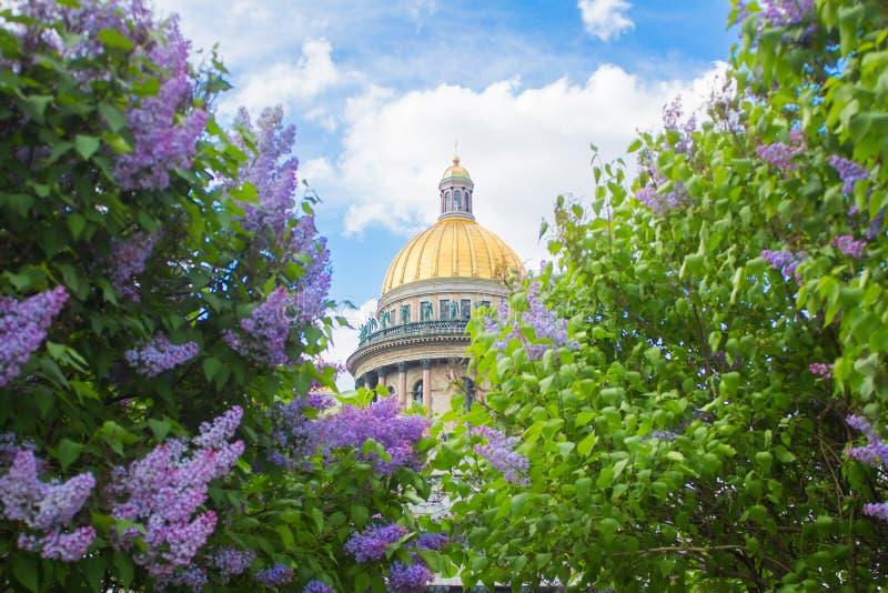 Собор ` s Исаак Святого в цветках сирени и яблонь стоковое изображение