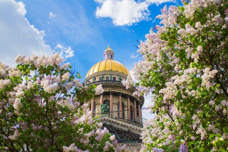 Собор ` s Исаак Святого в цветках сирени и яблонь стоковая фотография rf