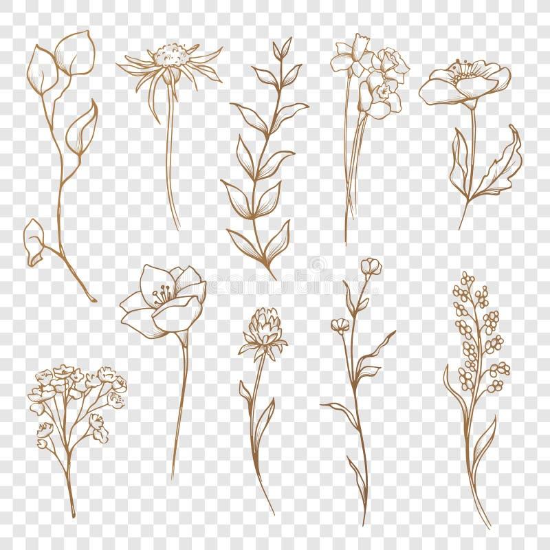 Собрание вектора флористическое Нарисованная рука установила цветки и листья бесплатная иллюстрация