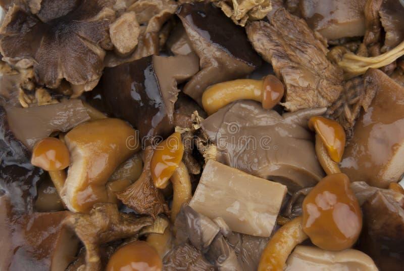собрание грибов стоковые изображения
