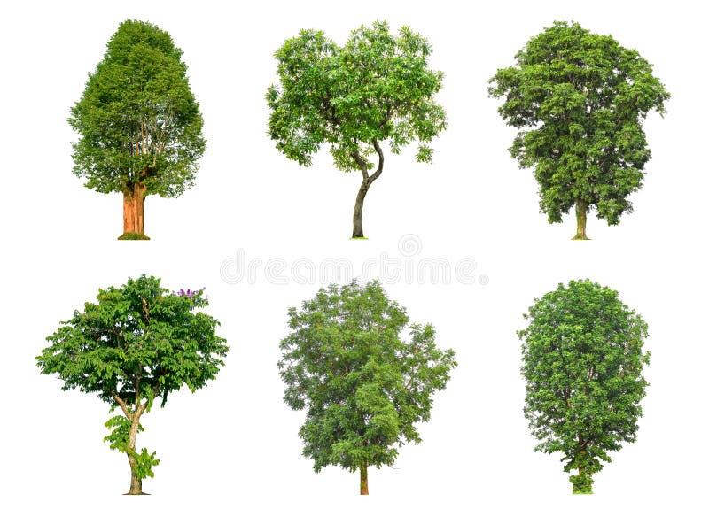 Собрание дерева изолированное на белой предпосылке стоковые изображения rf