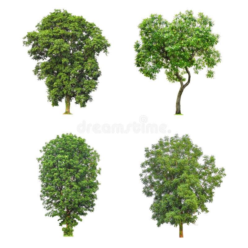 Собрание дерева изолированное на белой предпосылке стоковые фото