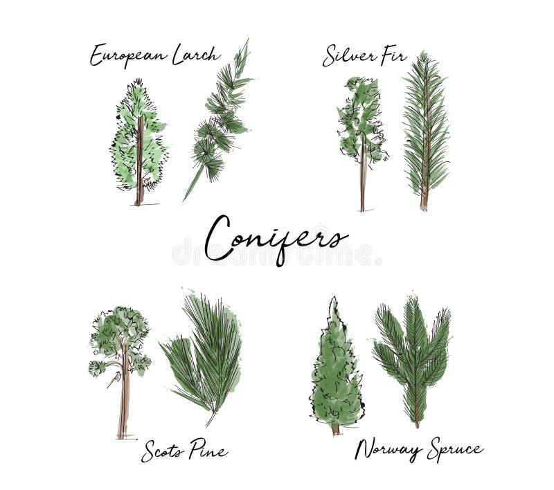 Собрание деревьев и листьев акварели нарисованный рукой эскиз лесного дерева и лист иллюстрация штока