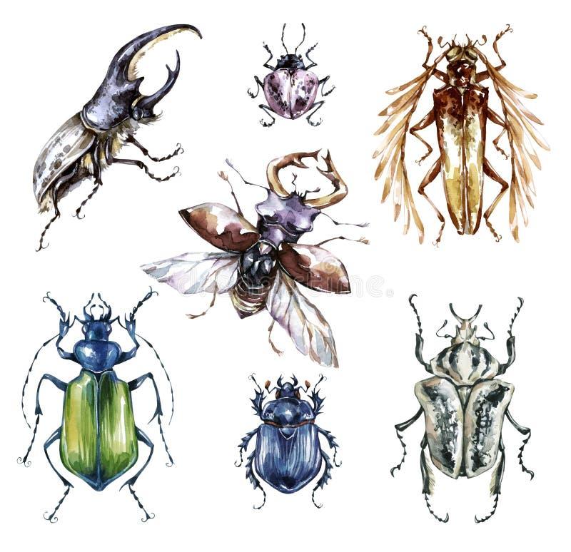 Собрание жуков акварели на белой предпосылке Животное, насекомые инсектология wildlife Смогите быть напечатано на футболках иллюстрация вектора