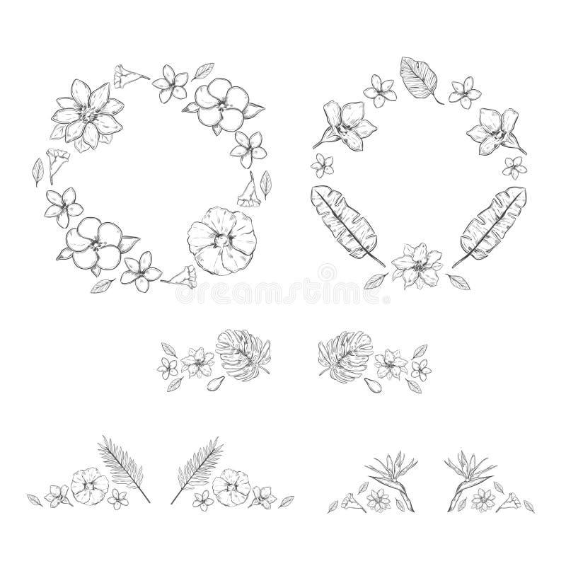 Собрание заводов эскиза Monochrome флористическое экзотическое иллюстрация вектора