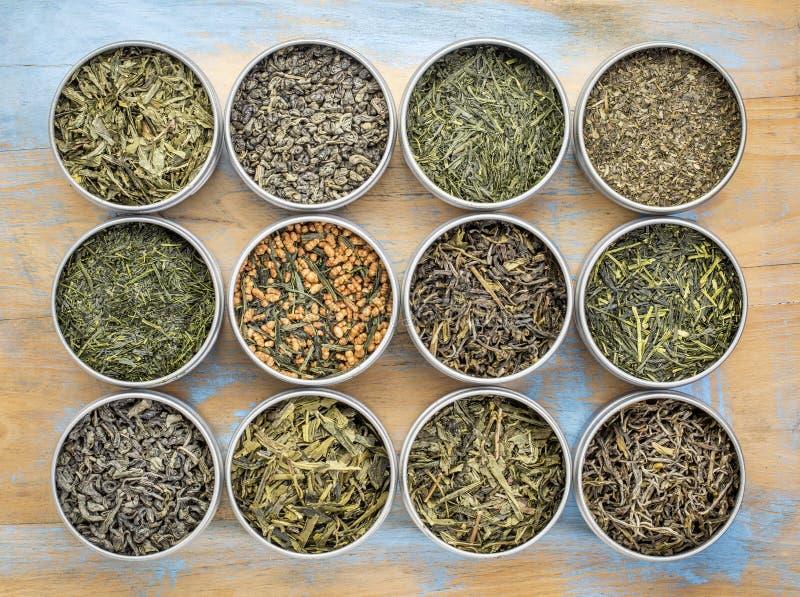 Собрание зеленого чая свободных лист стоковые фотографии rf