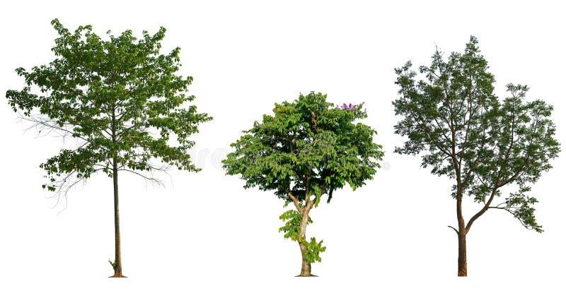 Собрание изолированное деревом на белой предпосылке стоковое фото rf