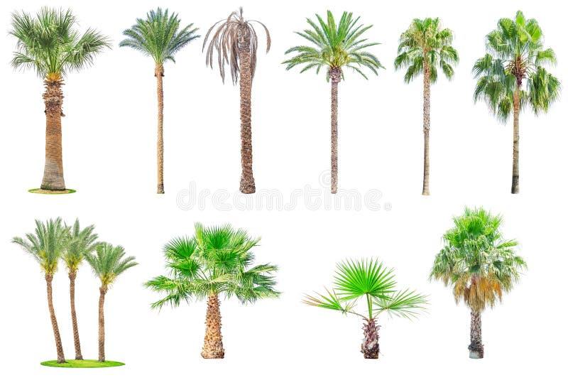 Собрание изолированных пальм стоковые изображения
