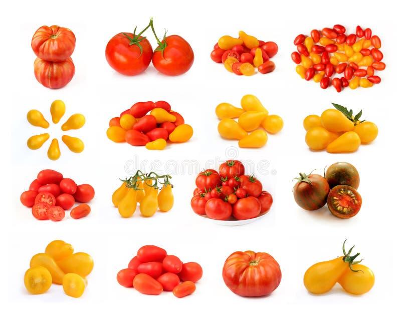 Собрание изолированных томатов стоковые фотографии rf