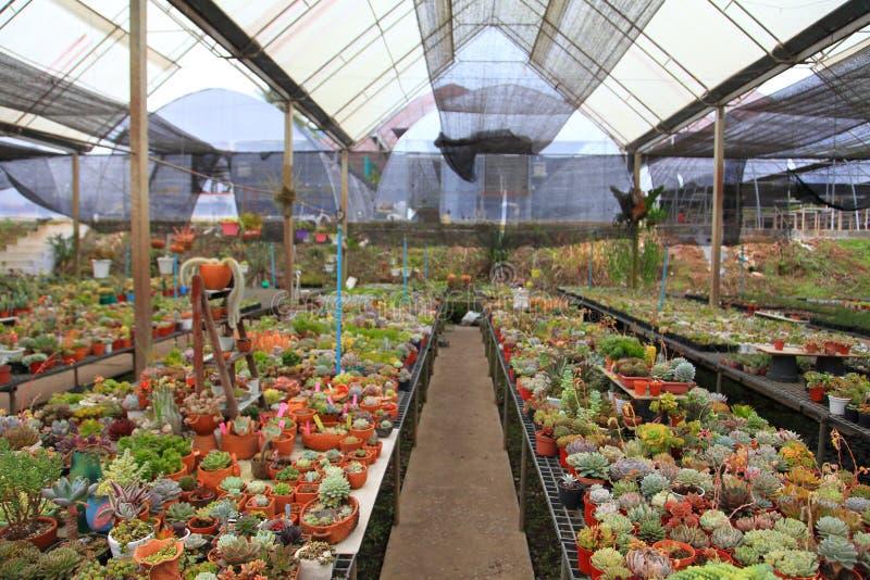 Собрание кактуса и суккулентного парника сада для сухого завода любить и пустыни стоковое изображение rf