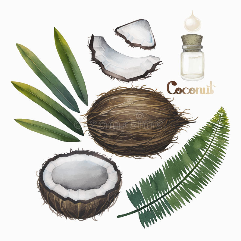 Собрание кокоса акварели иллюстрация штока