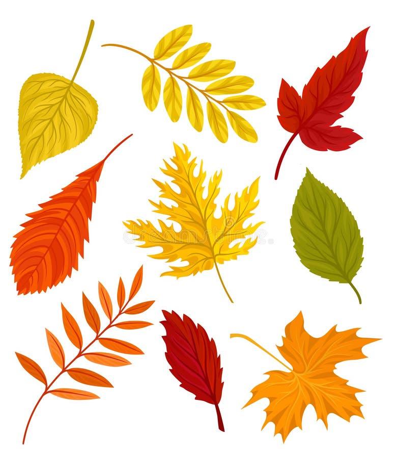 Собрание красивой красочной иллюстрации вектора листьев осени на белой предпосылке иллюстрация штока