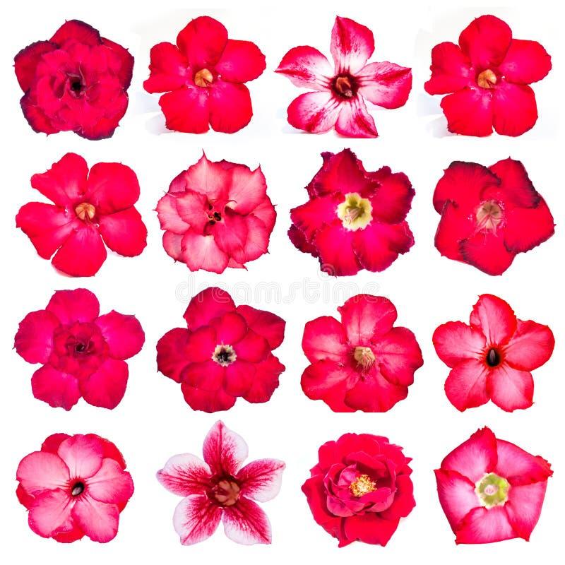 Собрание красных цветков изолированных на белой предпосылке стоковое изображение