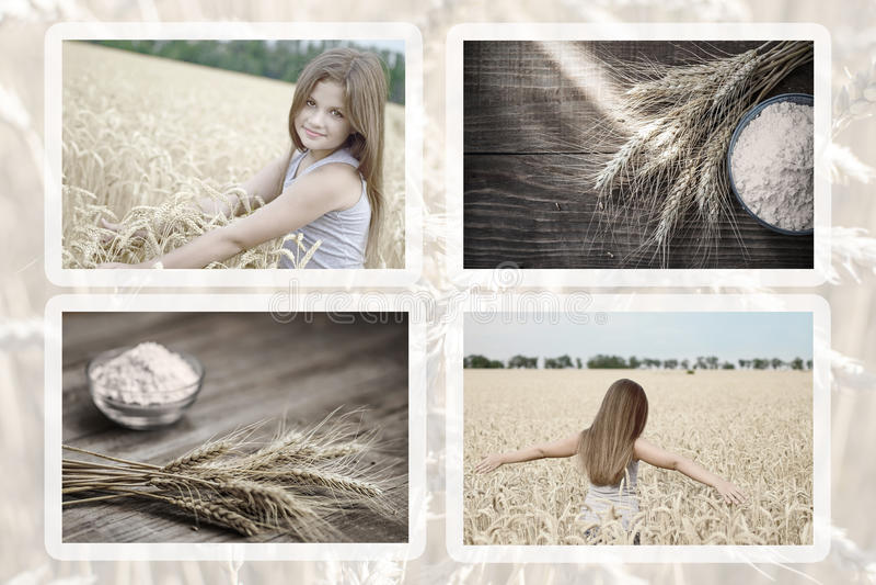 Собрание маленькой девочки фото красивой в ушах и муке пшеницы amd пшеничного поля на старой деревянной деревенской таблице стоковая фотография