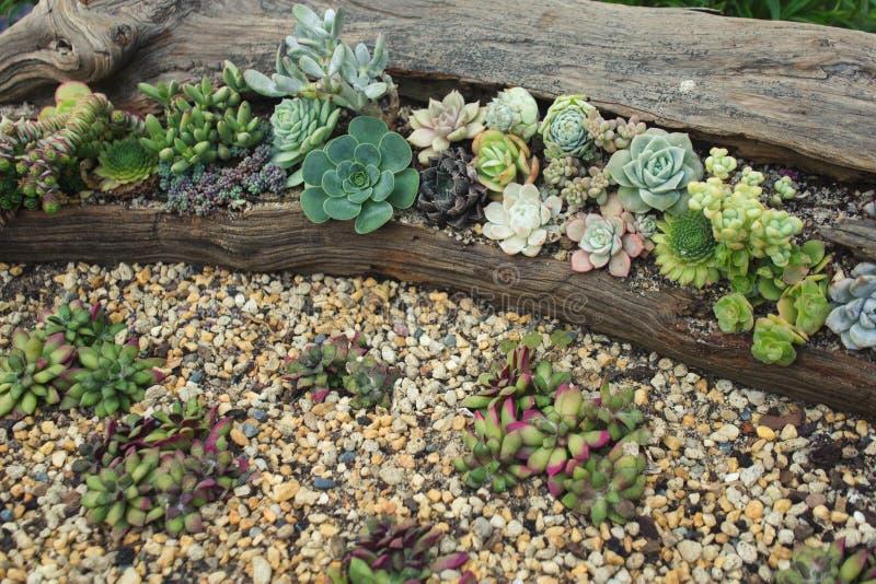 Собрание милых различных succulents стоковое фото rf