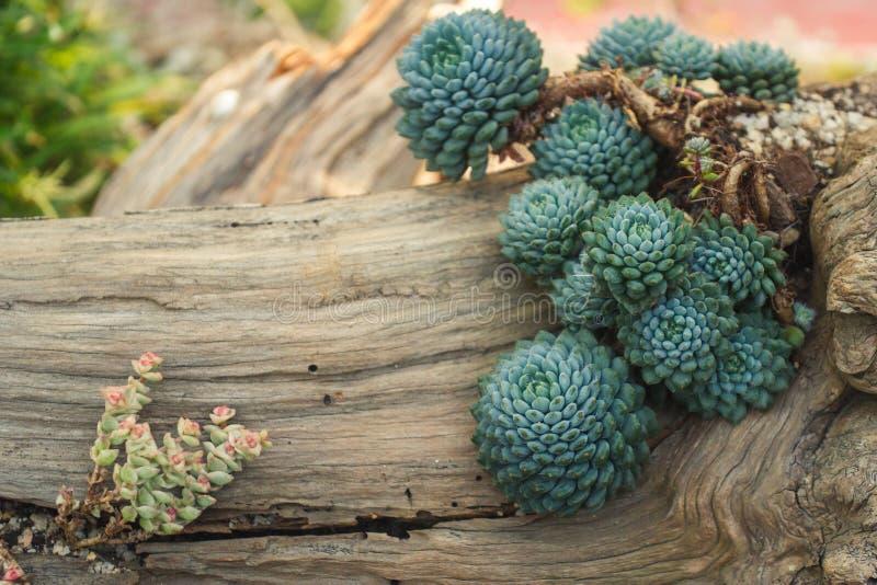 Собрание милых различных succulents стоковая фотография rf