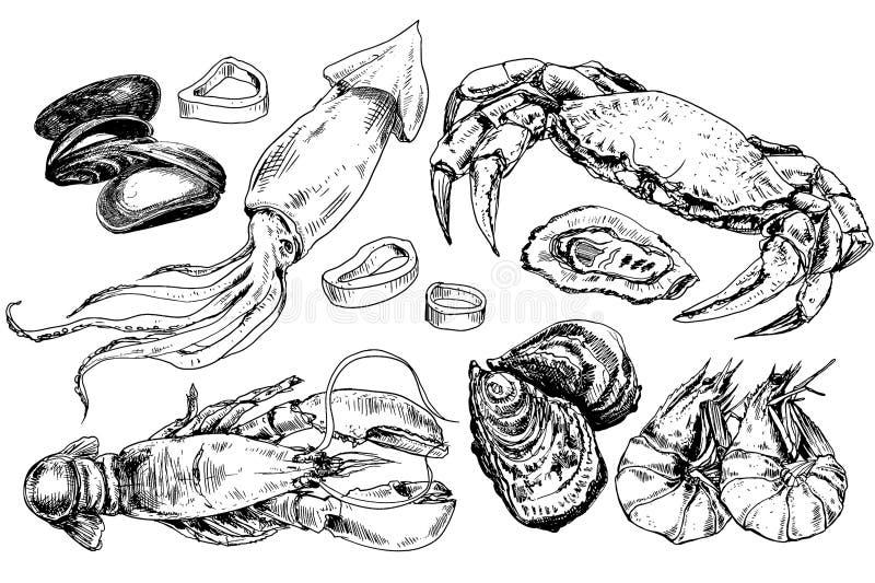 Собрание морепродуктов нарисованное рукой иллюстрация вектора