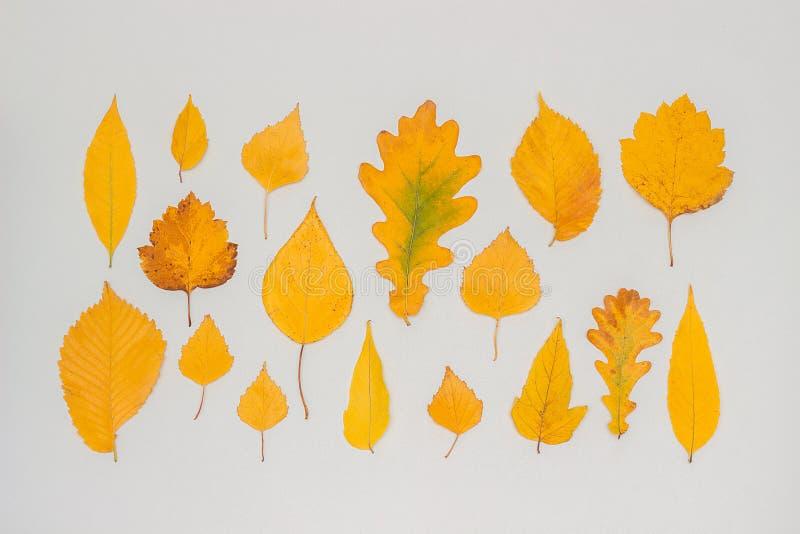 Собрание, набор листьев осени желтых на серой предпосылке, обоях падения E стоковая фотография rf