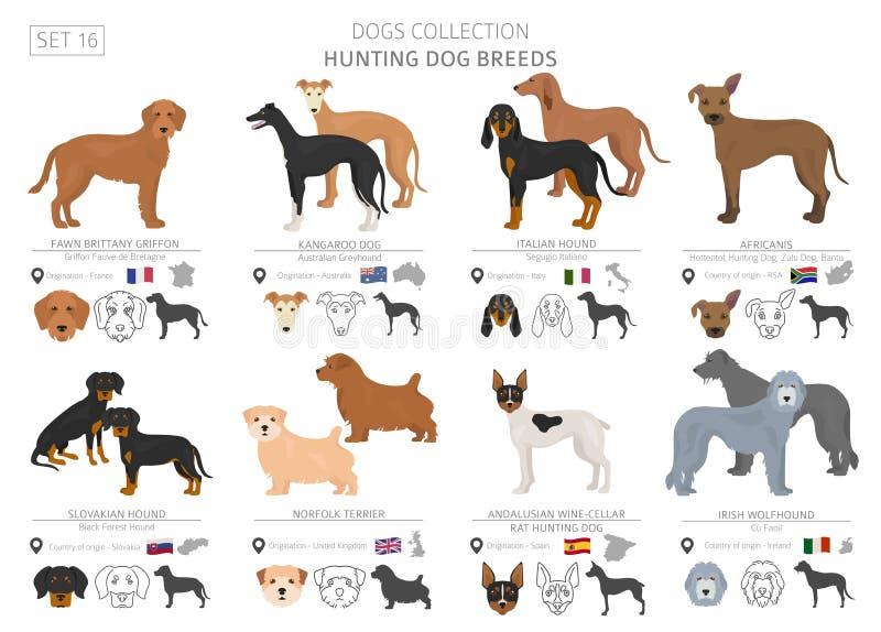 Собрание охотничьих собак изолированное на белизне Плоский стиль Другой цвет и страна происхождения иллюстрация вектора