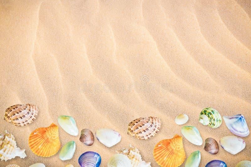 Собрание предпосылки seashells стоковое изображение