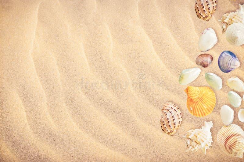 Собрание предпосылки seashells стоковые изображения