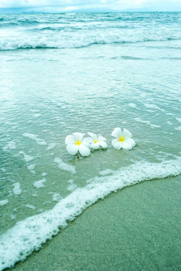 собрание пляжа цветет белизна природы стоковые изображения rf
