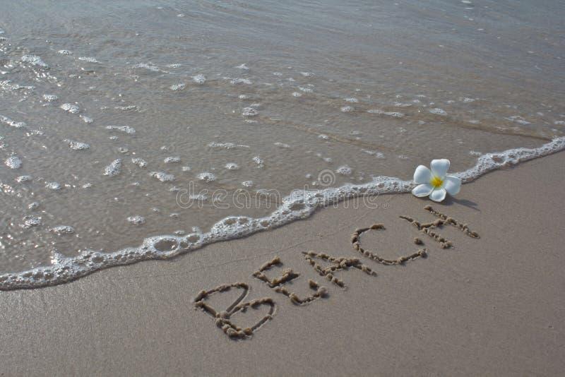 собрание пляжа цветет белизна природы стоковая фотография