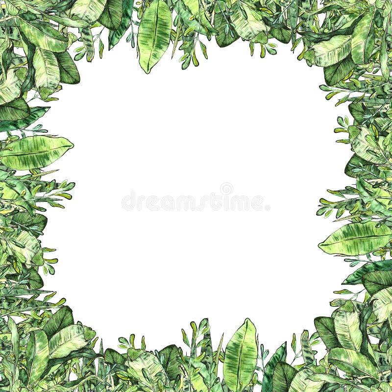 Собрание растительности акварели Фон рамки квадратный иллюстрация вектора