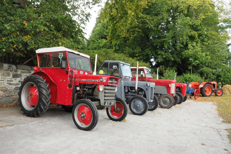 Собрание 4 старых тракторов Massey Ferguson стоковые фото