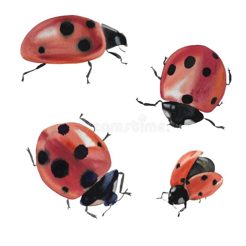 Собрание с ladybug Иллюстрация насекомого изолированная на белой предпосылке Ladybug для дизайна иллюстрация штока